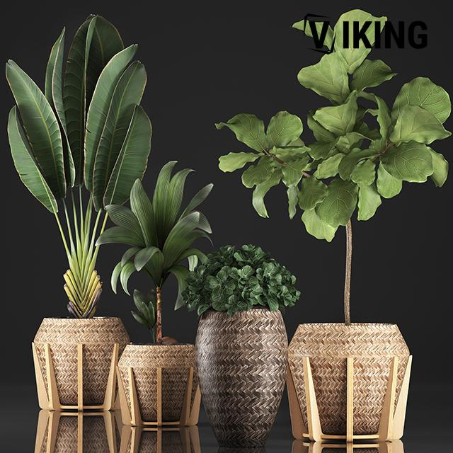 1103.Plant 3dsmax File free download by MinhNguyen