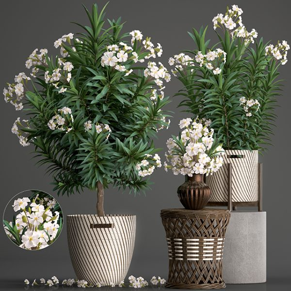 1119.Plant 3dsmax File free download by MinhNguyen