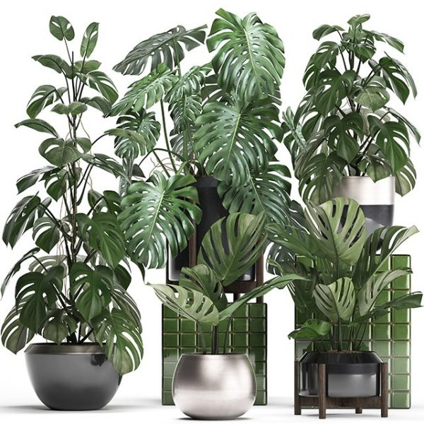 1809.Plant Sketchup File free download