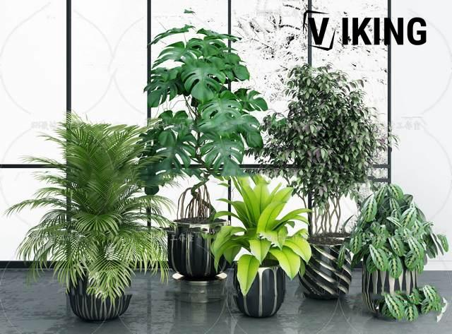 944.Plant Collection 3dsmax File free download