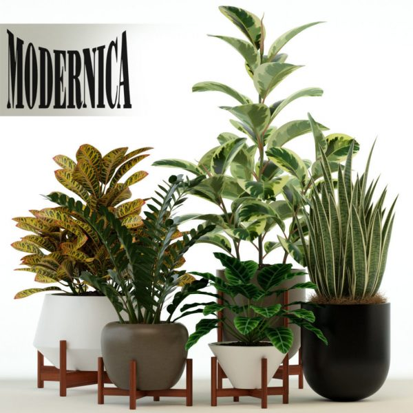 978.Plant 3dsmax File free download 1 scaled 1